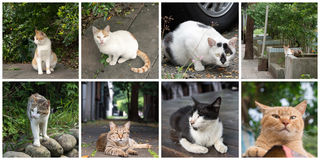 Collection of cats Stock Images