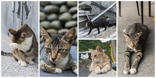 Collection of cats Royalty Free Stock Photo