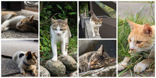 Collection of cats Royalty Free Stock Photography