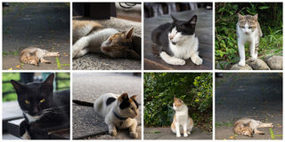 Collection of cats Stock Photography