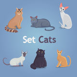 Collection of Cats of Different Breeds. Set cats Royalty Free Stock Images