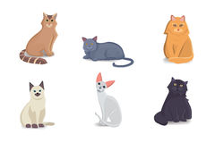Collection Cats of Different Breeds. Vector  cat on white background. Home animal or pets. Fanny kittens faces Stock Photography