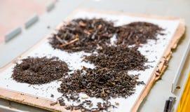 Collection of Ceylon teas closeup view Royalty Free Stock Image