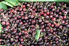 Collection of cherries,ciliegie Royalty Free Stock Photos