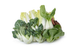 Collection chinese cabbages isolated Royalty Free Stock Photos