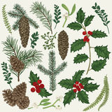 Collection of Christmas plant. Royalty Free Stock Image