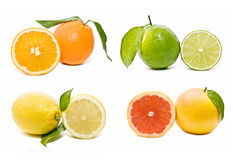 Collection of citrus Royalty Free Stock Images