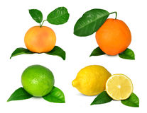 Collection of citrus fruits Stock Photos