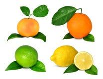 Collection of citrus fruits stock photos