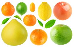 Collection of citrus fruits royalty free stock images