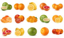Collection of citrus fruits isolated on white background. Stock Photo