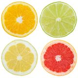 Collection of citrus fruits orange lemon slices sliced square is Royalty Free Stock Photography
