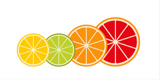 Collection of citrus slices – grapefruit, lime, lemon and oran Royalty Free Stock Photos