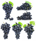 Collection cluster of blue grape isolated stock photography