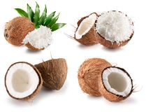 Collection of coconuts isolated on a white background.  Royalty Free Stock Photos