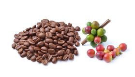 Collection of Coffee beans isolated on white background.  Royalty Free Stock Photo
