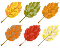 Collection of color autumn leaves Royalty Free Stock Photos