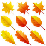Collection of color autumn leaves Royalty Free Stock Image