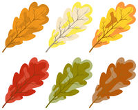 Collection of color autumn leaves Royalty Free Stock Images