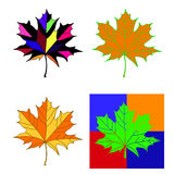 Collection of color autumn leaves. Stock Images