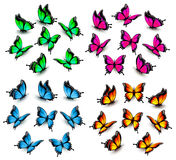 Collection of color butterflies. Royalty Free Stock Photography