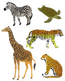 A collection of color illustrations of animals. On a white background Royalty Free Illustration