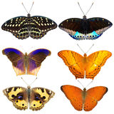 Collection of colored butterflies Stock Photography
