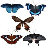 Collection of colored butterflies Royalty Free Stock Image