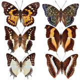 Collection of colored butterflies Stock Photo