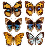Collection of colored butterflies Royalty Free Stock Photos