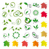Collection of colored leaves Royalty Free Stock Photography