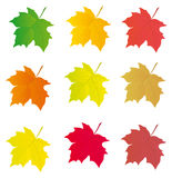 Collection of colored leaves to the design Royalty Free Stock Photos