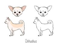 Collection of colored and monochrome contour line drawings of face and full body of hairless Chihuahua, front and side Stock Photography