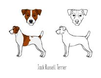 Collection of colored and monochrome contour line drawings of head and full body of Jack Russel Terrier, front and side. Views. Small hunting dog, active pet Royalty Free Stock Photo