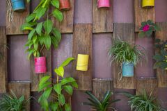 Collection colorful aluminium can pot on wooden wall stock photo