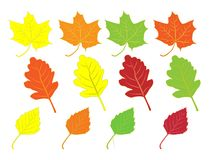Collection of colorful autumn leaves Royalty Free Stock Photography