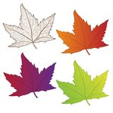 Collection colorful autumn leaves isolated. Stock Images