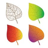 Collection colorful autumn leaves isolated. Stock Photos