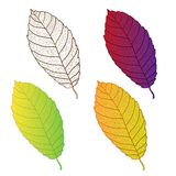 Collection colorful autumn leaves isolated. Stock Photo