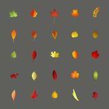 Collection of colorful autumnal leaves isolated on gray backgrou Royalty Free Stock Photos