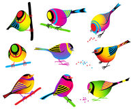 Collection Of Colorful Birds stock images