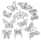 Collection of colorful butterflies Royalty Free Stock Photography