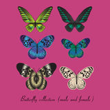 Collection with colorful butterfly Stock Photos