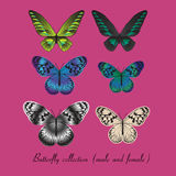 Collection with colorful butterfly Royalty Free Stock Images