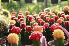 Collection of colorful cactus stock photography
