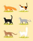 Collection of colorful cats Royalty Free Stock Photos