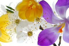 Collection of colorful flowers Royalty Free Stock Photos
