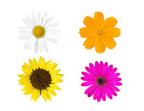 Collection colorful flowers Royalty Free Stock Images