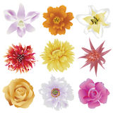 Collection of colorful flowers on white background Stock Photo