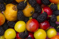 Collection of colorful, fresh fruit Stock Images